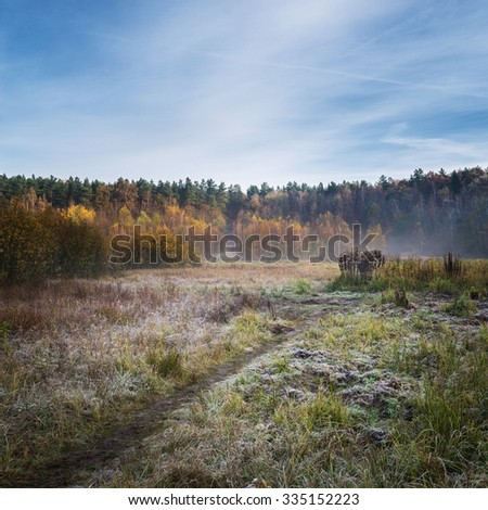 Misty field in the middle of forest during autumn season