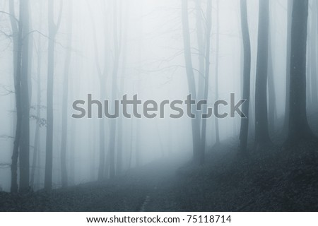 misty forest after rain - stock photo