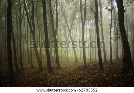 misty forest at autumn