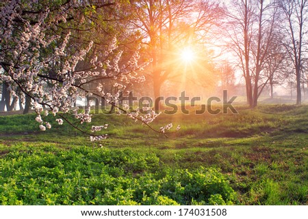 Misty forest at dawn in spring - stock photo