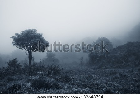 misty forest at dusk - stock photo