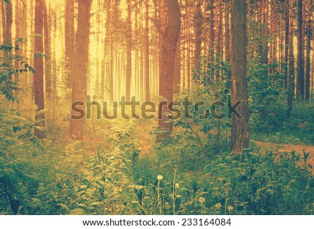 misty forest at sunset, retro filtered, instagram style  - stock photo