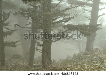 Misty forest at the morning. Turkey. Lycian way.