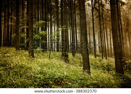 Misty forest - autumn in the Beskidy mountains. Vintage style. - stock photo