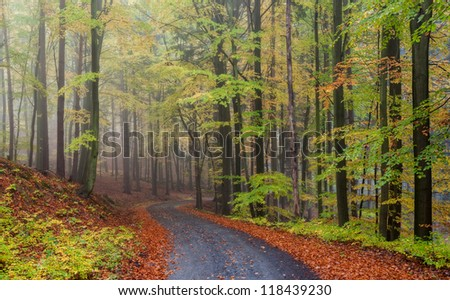 Misty forest during the autumn time, panoramic picture. - stock photo