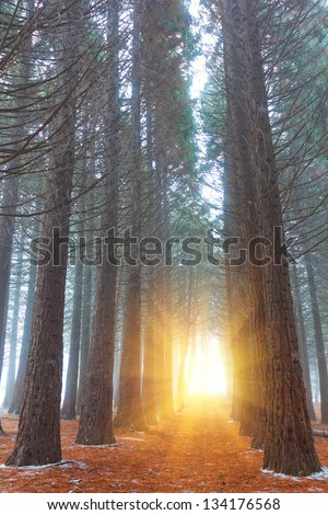 misty forest in a rays of sun - stock photo