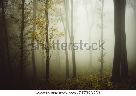 misty forest in autumn natural background