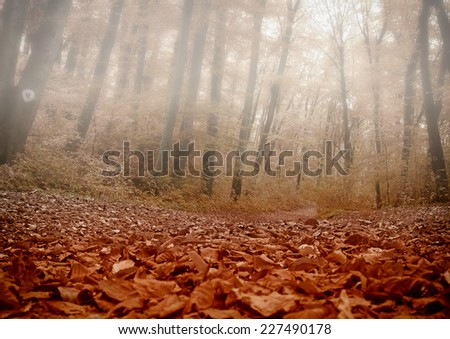 misty forest in fall - stock photo