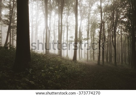 misty forest in morning light