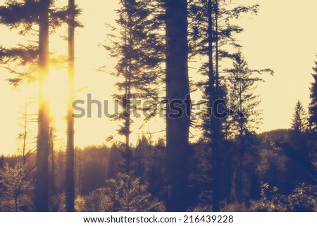 Misty Forest in the Morning Light with a retro vintage instagram filter effect - stock photo