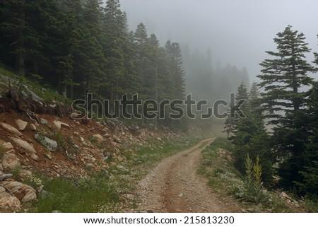 Misty forest in Uludag Mountains, Turkey - stock photo