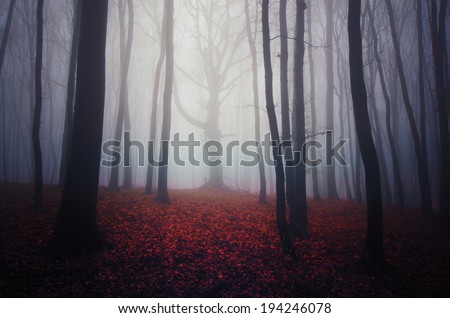 misty forest landscape with colorful leaves on the ground - stock photo