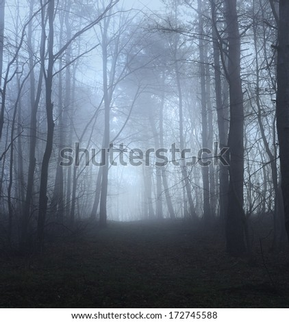 misty forest path - stock photo