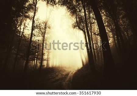 misty forest road at sunset - stock photo