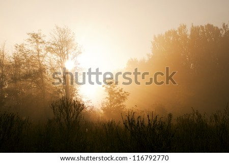Misty forest to the rising day. - stock photo