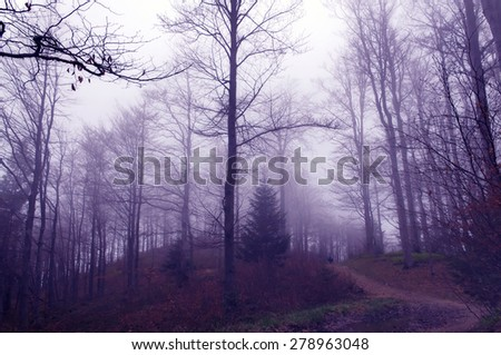 Misty forest with magical and pink glow - stock photo