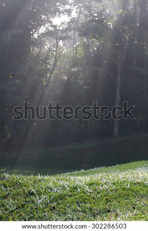 Misty forest with sunlight and shadows on grass