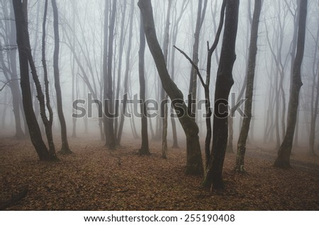 misty forest with twisted trees - stock photo
