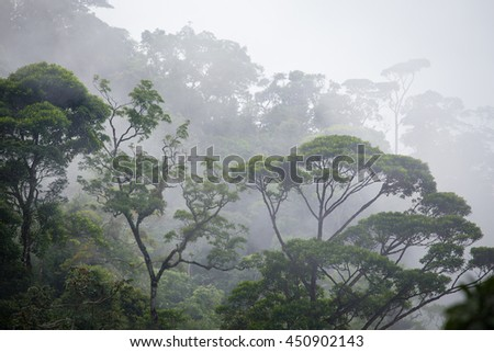misty jungle forest near Rio at Brazil