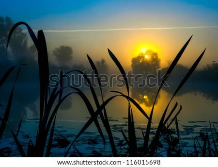 Misty lake - stock photo