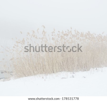misty lake - stock photo