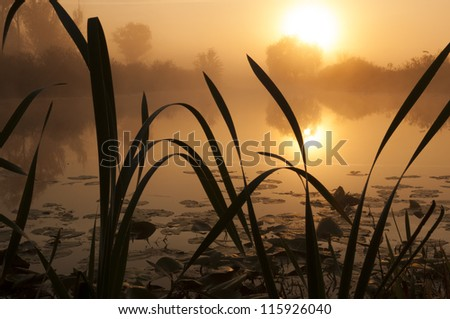 Misty lake on a summer - stock photo