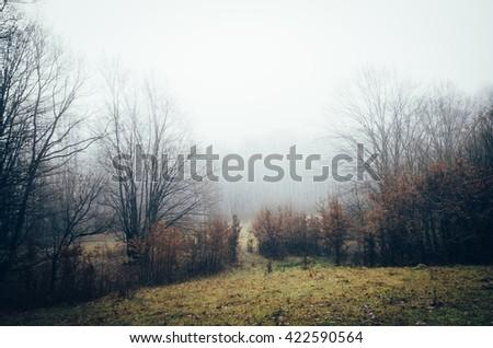 misty landscape near forest - stock photo