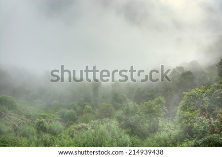 Misty morning at Nagarkot - stock photo