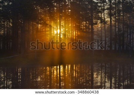 Misty morning by the lake, rising sun behind the trees. - stock photo