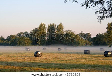 Misty morning field with bales of hay after the harvest