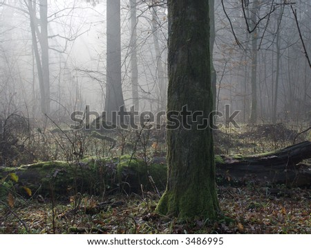 Misty morning in forest,autumn