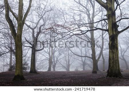 Misty morning in Hampstead Heath, London - stock photo