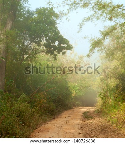 Misty morning  in jungle near Umphang. Tak Province in northwestern Thailand. January. - stock photo