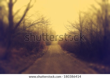 misty morning in the park - stock photo