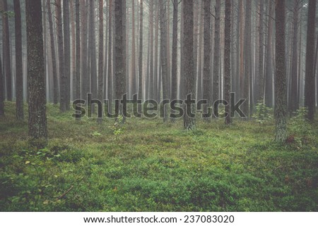 Misty morning in the woods - retro, vintage style look - stock photo