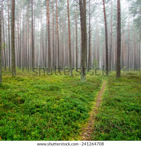 Misty morning in the woods - square image - stock photo
