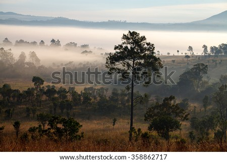 misty morning sunrise and pine tree in mountain at Thung Salang Luang National Park Phetchabun,Thailand