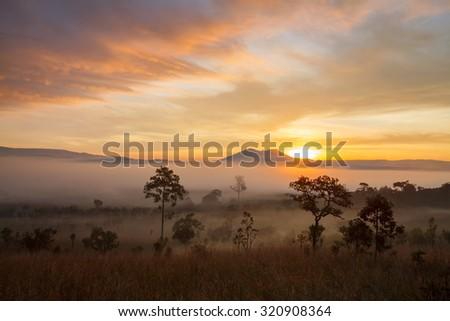 Misty morning sunrise at Thung Salang Luang National Park Phetchabun,Thailand  - stock photo