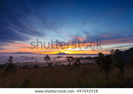 Misty morning sunrise at Thung Salang Luang National Park Phetchabun,Thailand