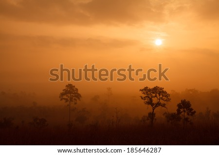 misty morning sunrise in the mountains in Phetchabun ,Thailand