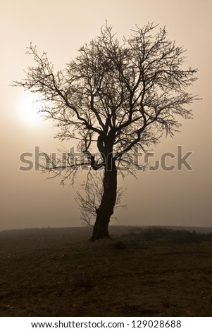 Misty morning with tree in silhouette - stock photo