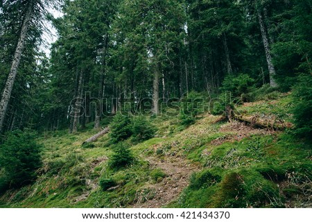 Misty Mountain green Forest  landscape. Nature, trees, Travel