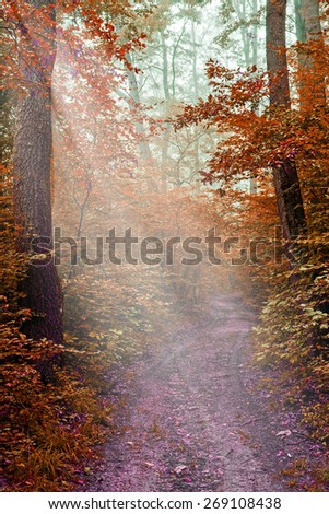 Misty path in the oak forest  - stock photo