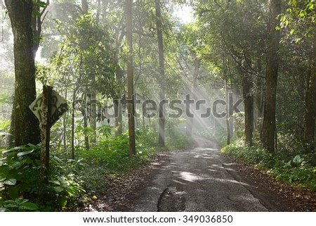 misty road, Doi pui national park, Chiang mai, Thailand
