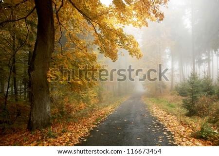 Misty rural way through autumn forest - stock photo