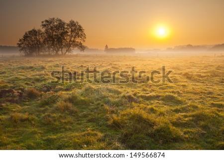misty summer sunrise over meadow - stock photo