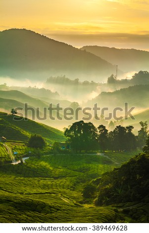 Misty sun rays over tea plantation in Cameron Highlands 3 - stock photo