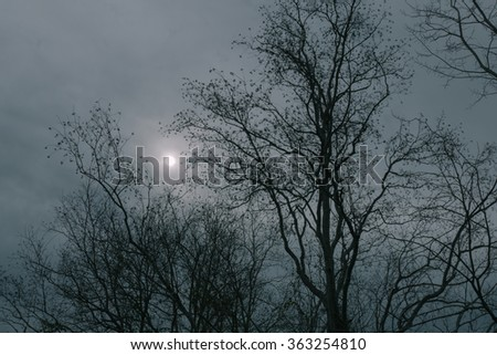 Misty sun shining through winter gray clouds with silhouette of leafless trees