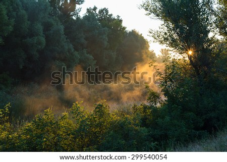 Misty, sunny morning in  deciduous forest in summer. Sunrise. - stock photo