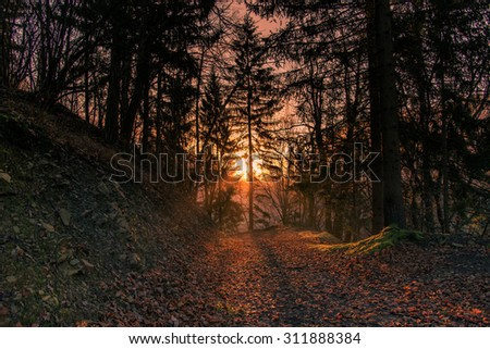 Misty sunrise in the forest. Beautiful and mystic atmosphere in the woods at dawn. - stock photo